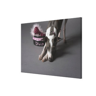 Dog with diva bowl, sniffing floor canvas print