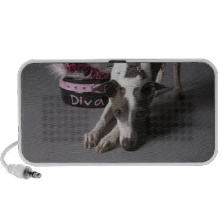 Dog with diva bowl, sniffing floor mini speakers