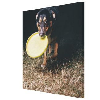Dog With Frisbee in Mouth Canvas Print