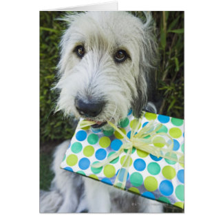 Dog with gift in mouth card