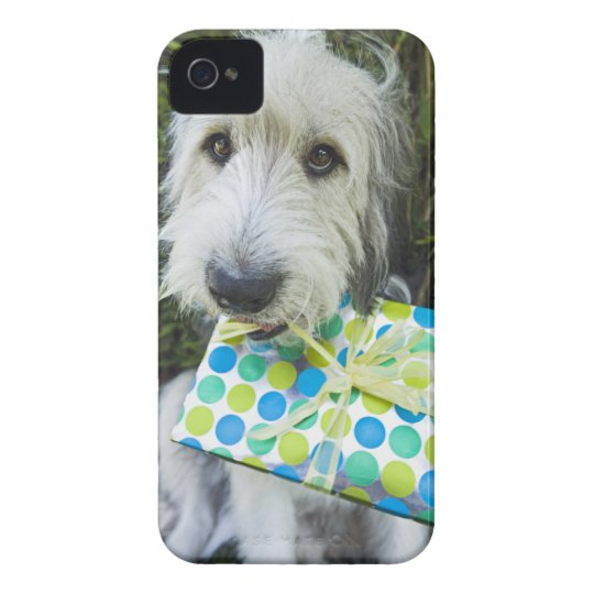 Dog with gift in mouth iPhone 4 case