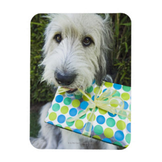 Dog with gift in mouth magnet