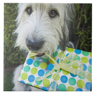 Dog with gift in mouth large square tile