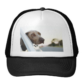 Dog with head out of a car window trucker hats