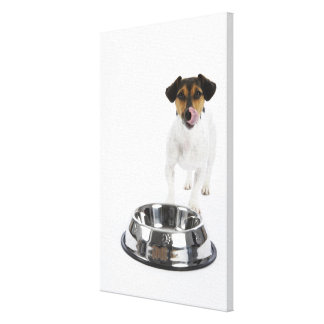 Dog with Large Bowl Canvas Print