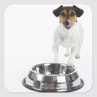 Dog with Large Bowl Square Sticker