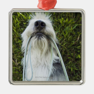 Dog with leash in mouth Silver-Colored square decoration