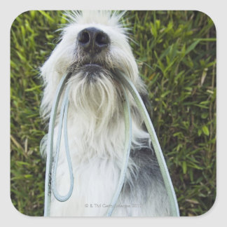 Dog with leash in mouth square sticker
