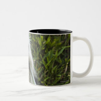 Dog with leash in mouth Two-Tone coffee mug