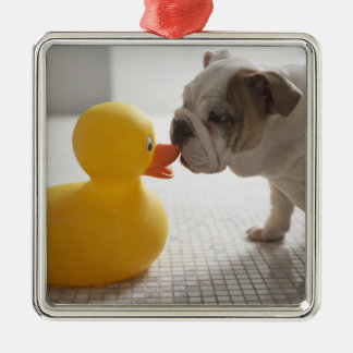Dog with plastic duck christmas ornament