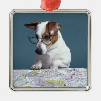 Dog with reading glasses studying map christmas ornament
