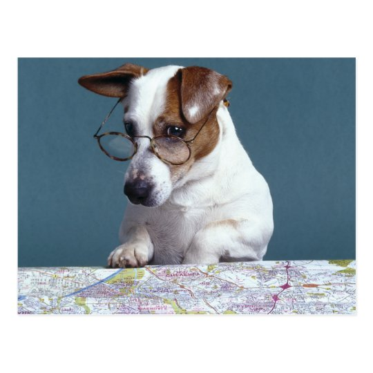 Dog with reading glasses studying map postcard