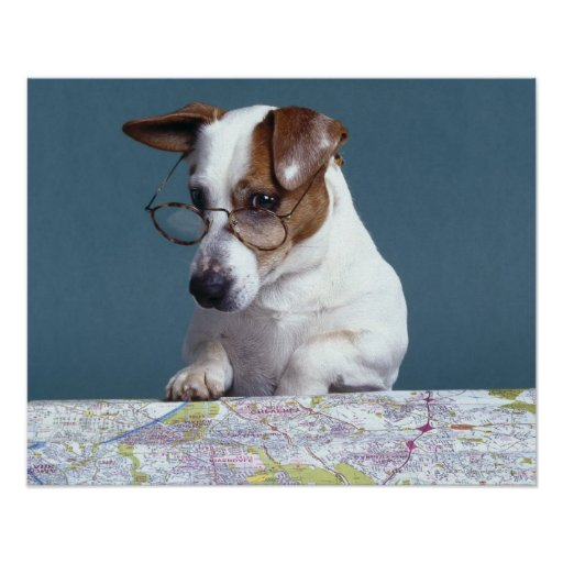 Dog with reading glasses studying map poster