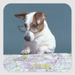 Dog with reading glasses studying map square sticker