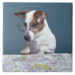 Dog with reading glasses studying map tiles