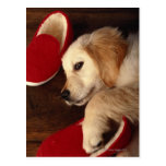Dog with shoes lying on wooden floor, elevated postcards