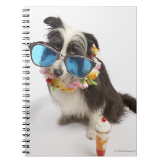 Dog with sunglasses and parfait notebooks