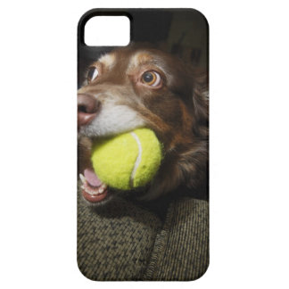 Dog with Tennis Ball Case For The iPhone 5