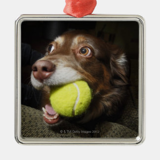 Dog with Tennis Ball Christmas Ornament