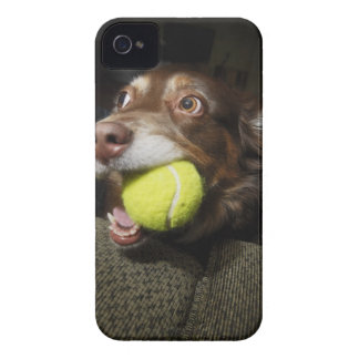 Dog with Tennis Ball iPhone 4 Cover