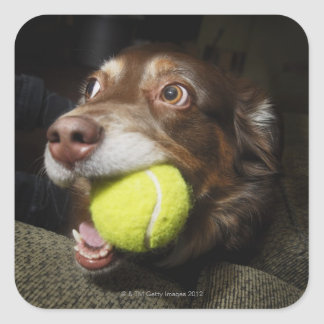 Dog with Tennis Ball Square Sticker