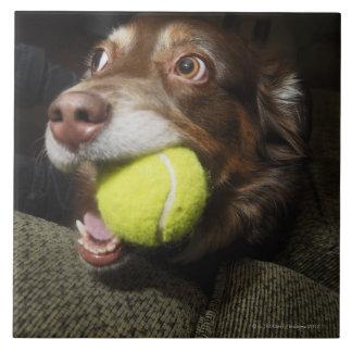 Dog with Tennis Ball Tile