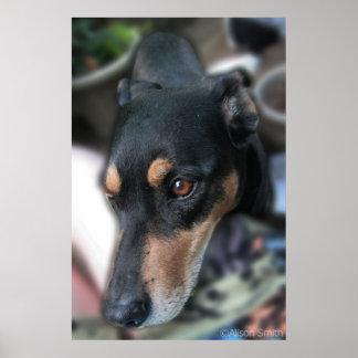 Doggie Face Print