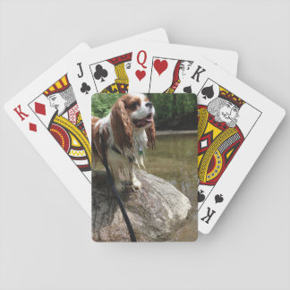 Doggie playing cards