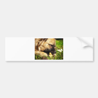 Doggy and cookie bumper sticker