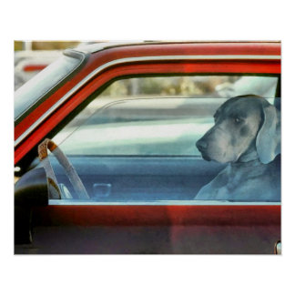 Doggy driver poster