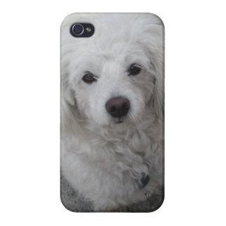 Doggy IPhone Case (Piggi) iPhone 4 Cases