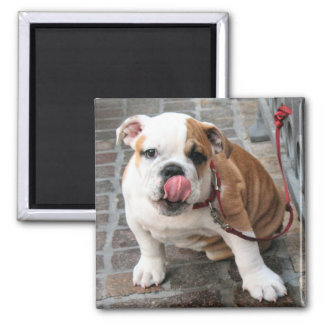 Doggy Kisses Square Magnet