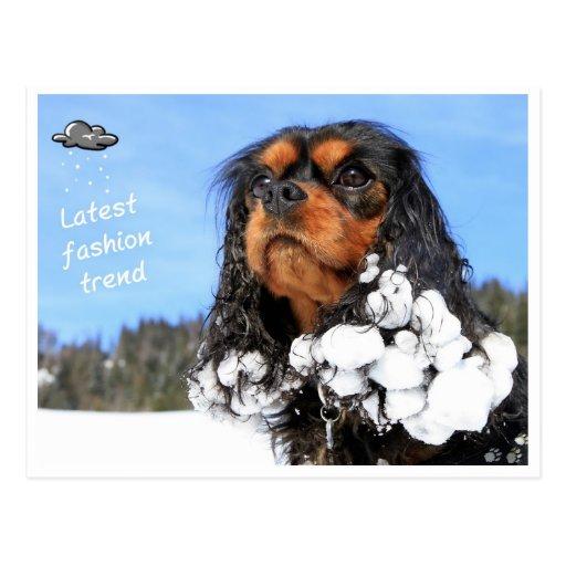 Doggy - latest winter fashion trend postcard