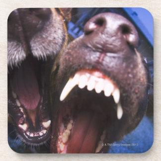 Dogs barking coaster