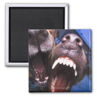 Dogs barking square magnet