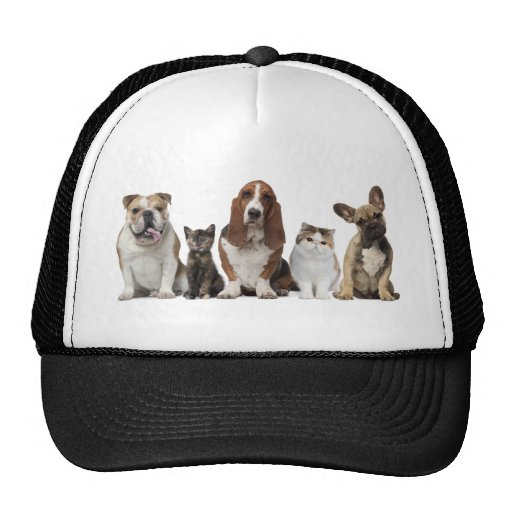 Dogs cats friends hat