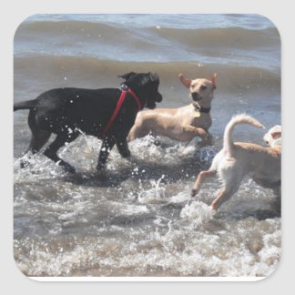 DOGS enjoying the beach! Square Stickers