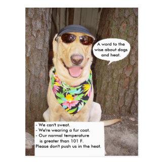Dogs & Heat Postcard