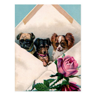 Dogs in an Envelope Postcard