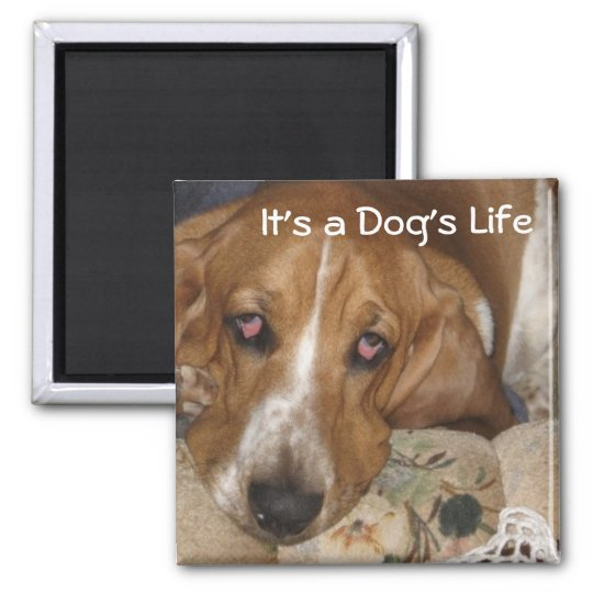 Dog's Life Square Magnet