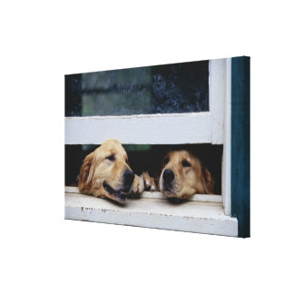 Dogs Looking Out a Window Canvas Print