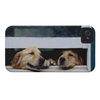 Dogs Looking Out a Window Case-Mate iPhone 4 Case