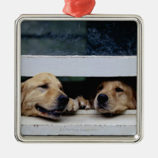 Dogs Looking Out a Window Christmas Ornament