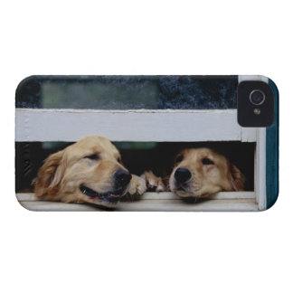 Dogs Looking Out a Window iPhone 4 Case-Mate Case