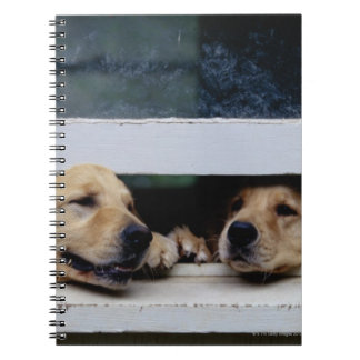 Dogs Looking Out a Window Notebook