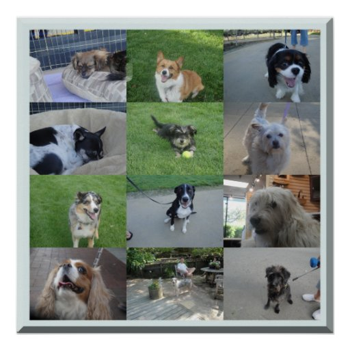 Dogs of Portola Valley Posters