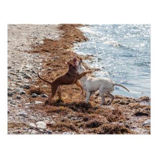 Dogs on beach flyer design