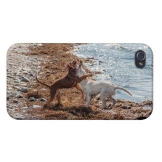 Dogs on beach iPhone 4 case