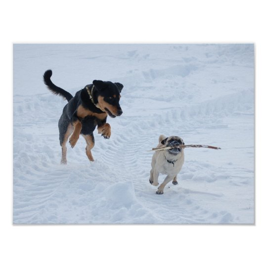 Dogs Playing in the Snow Poster