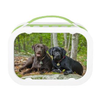 Dogs Puppies Black Lab Chocolate Labrador Retrieve Lunch Box